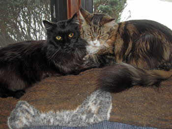 Geordi & Jayden share the couch - Jan. 2009